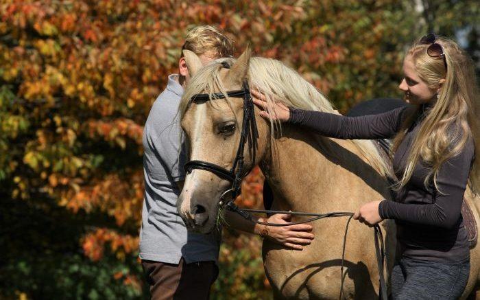 Chovani koni komunikacni prostredky
